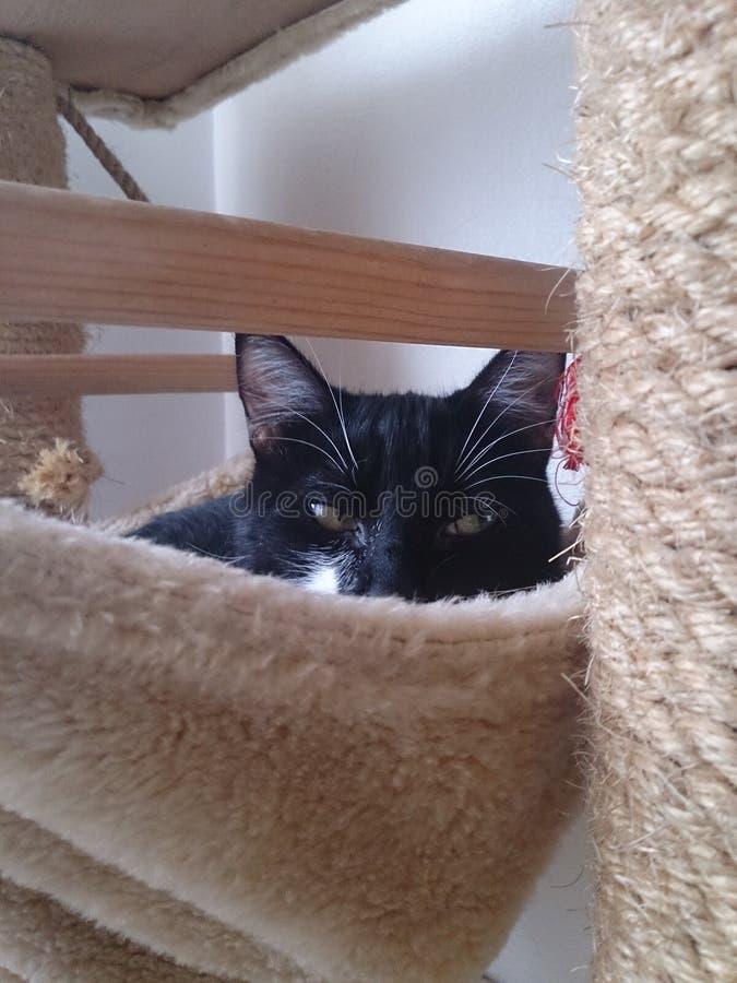 Gressy, bens dos gatos fotos de stock royalty free