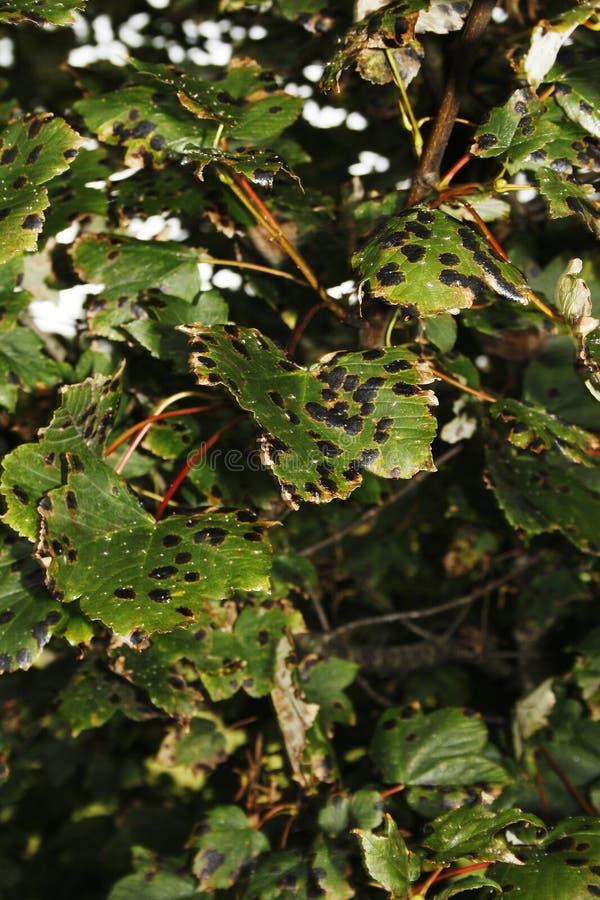 Gretna gräsplan royaltyfria foton