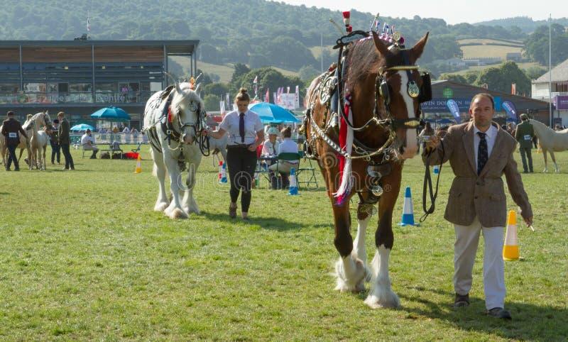 Grevskaphästar som visas på den kungliga walesiska showen royaltyfri bild