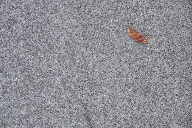Grey Asphalt With Leaf royalty free stock photo