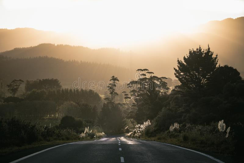 Grey Asphalt Road Surrounded by Trees stock photos