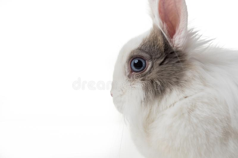 Rabbit on white background stock photo