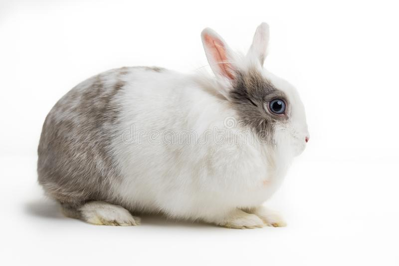 Rabbit on white background royalty free stock photo