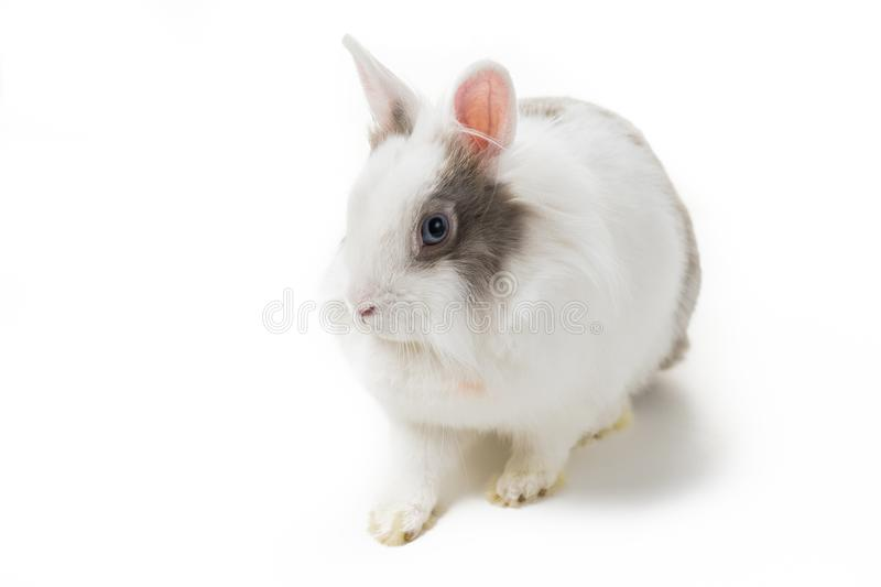 Rabbit on white background royalty free stock photography