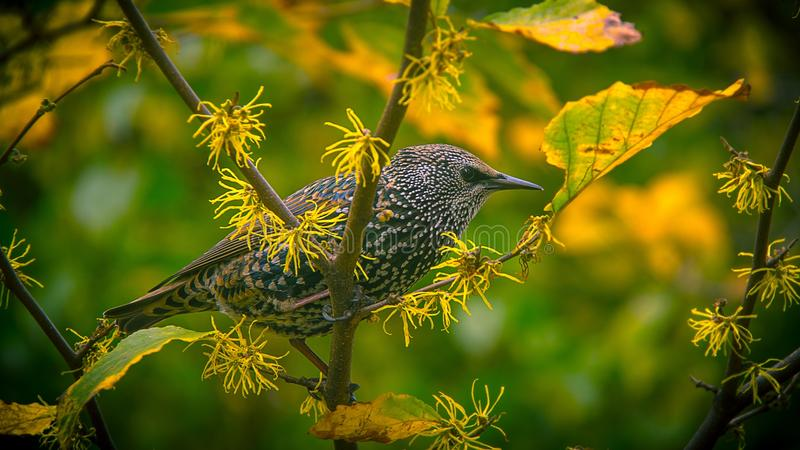 Grey Bird On Green And Yellow Tree Branch During Daytime Free Public Domain Cc0 Image