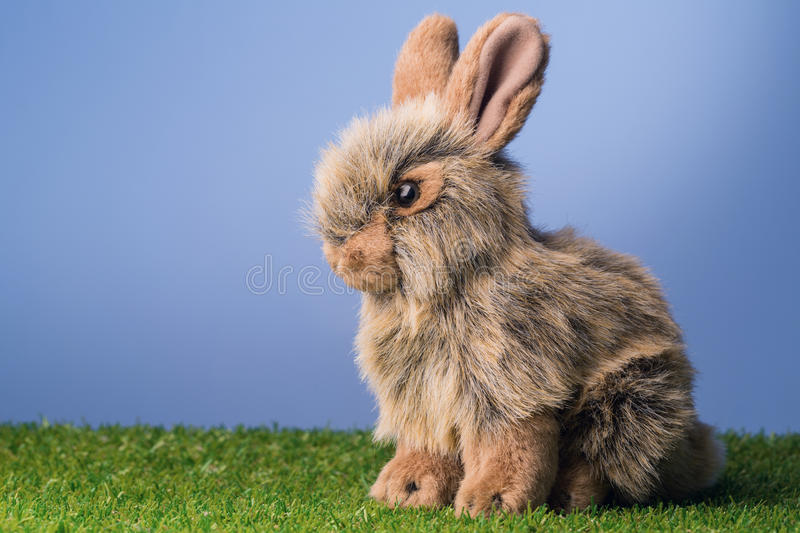 Grey bunny rabbit stock image