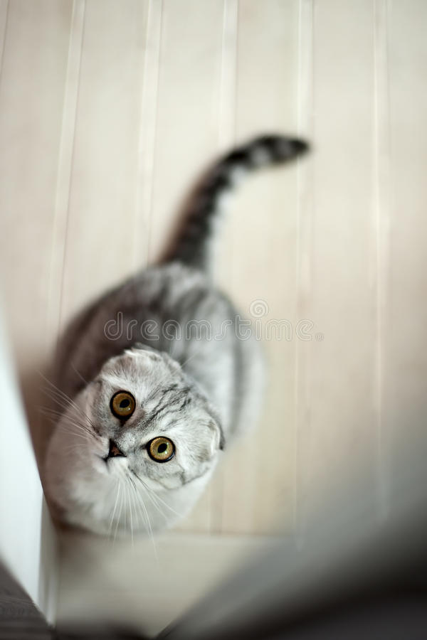 Download Grey cat stock image. Image of furry, looking, grey, background - 22758429