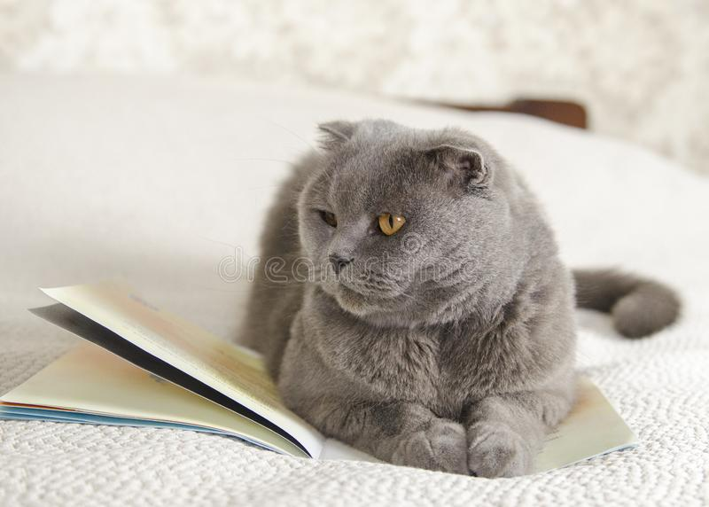 A grey cat and a book stock image