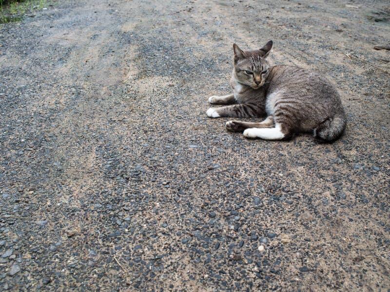 Grey Cat Crouching imagen de archivo