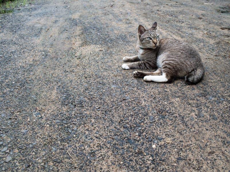 Grey Cat Crouching imágenes de archivo libres de regalías