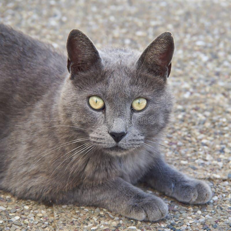 Grey cat looking
