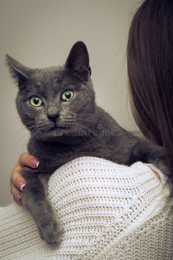 Grey Cat, ojos grandes fotografía de archivo