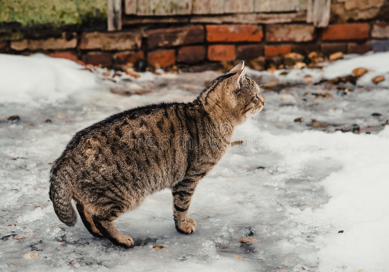 Grey cat outdoors. In winter stock photos