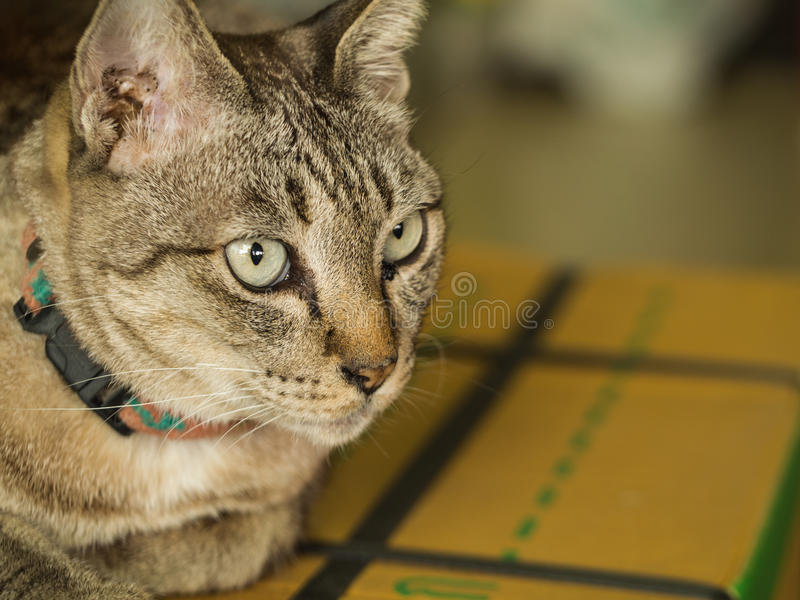 Grey Cat Sitting på asken royaltyfri bild
