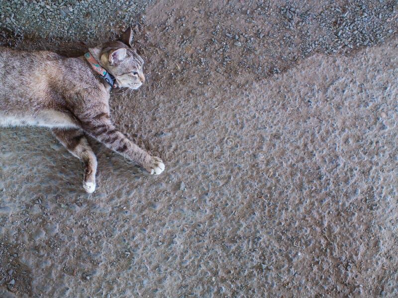 Grey Cat Sleeps gillar en Walke royaltyfri bild