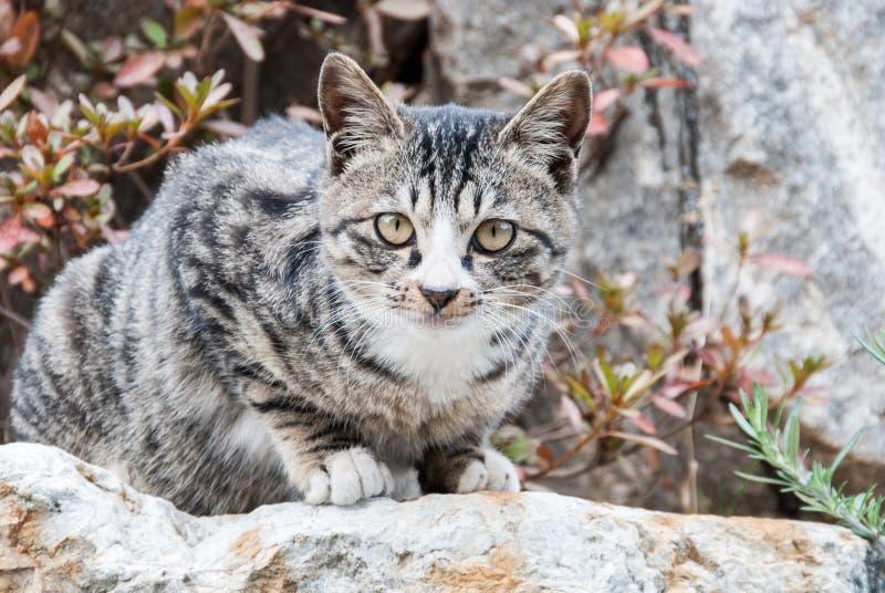 Grey Cat On uma rocha fotos de stock