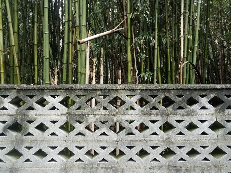 Grey cement wall with bamboo trees or forest royalty free stock images