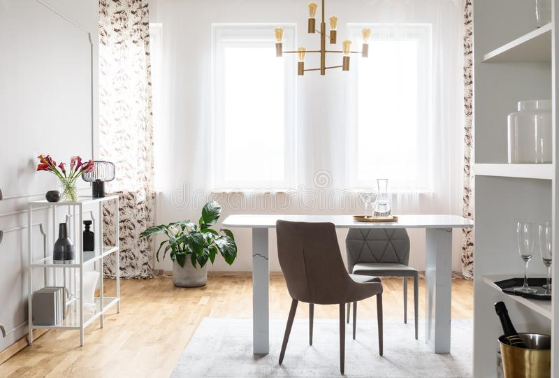 Grey chairs at table under gold lamp in living room interior with windows and plants. Real photo. Concept royalty free stock image