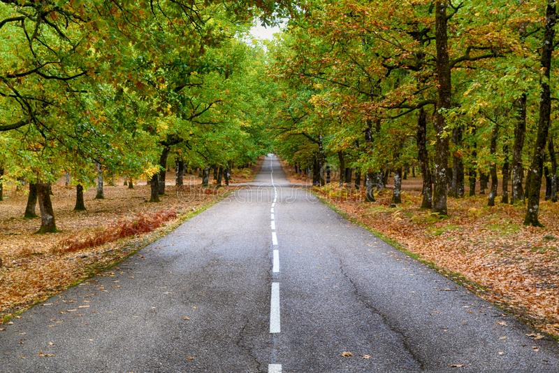 Grey Concrete Road in the Middle of Dried Leaves stock photos