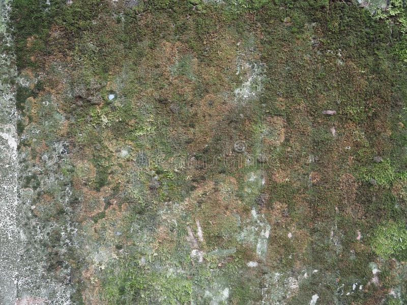 grey concrete texture with green moss background stock image