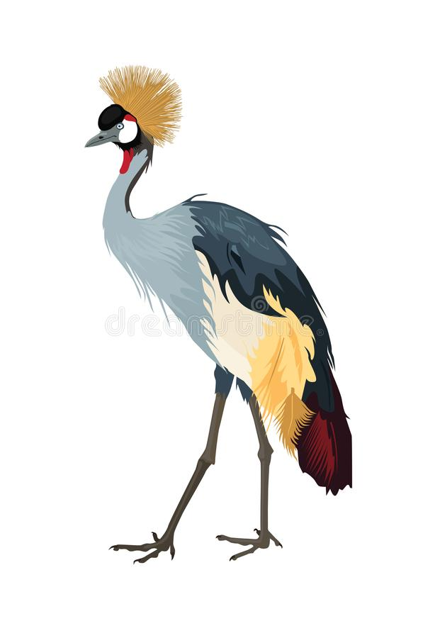 Free Grey Crowned Crane. Water Bird. Vector Illustration. Stock Image - 103616961