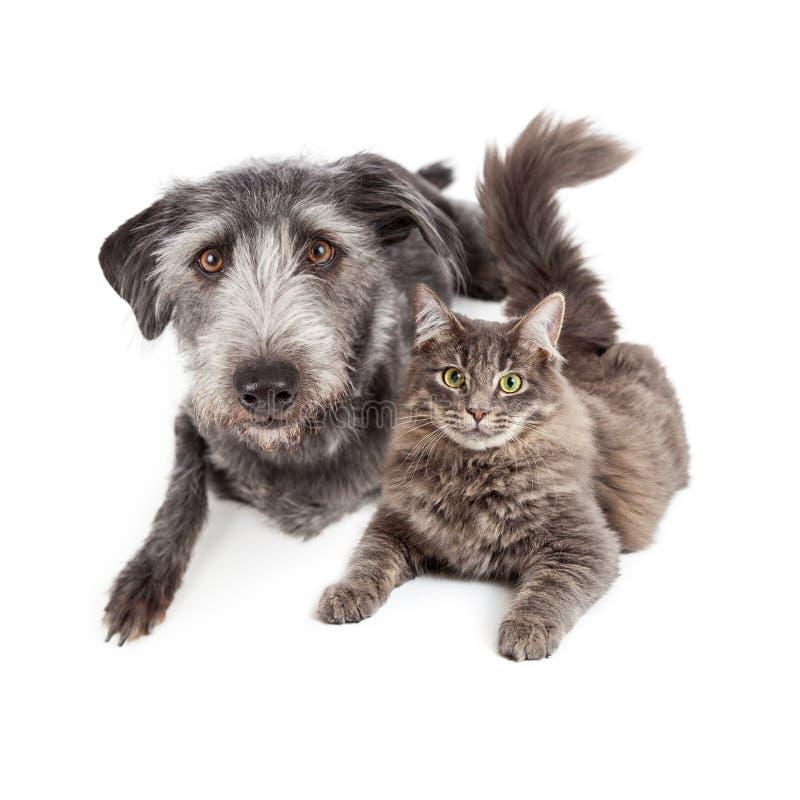 Grey Dog e Cat Laying Closely Together fotografia de stock
