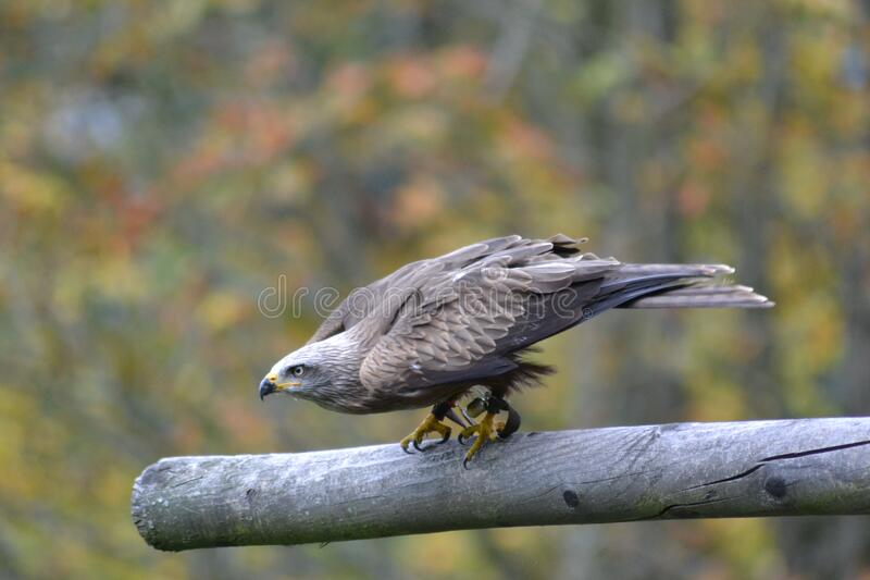 Grey Falcon Perched On Grey Branch In Selective Focus Photography Free Public Domain Cc0 Image