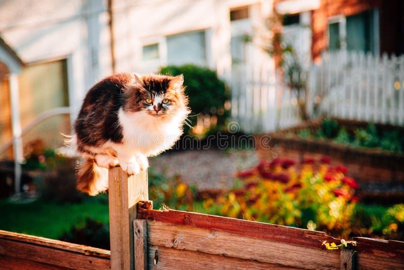 Grey Fluffy Cat Pet Concept photos libres de droits