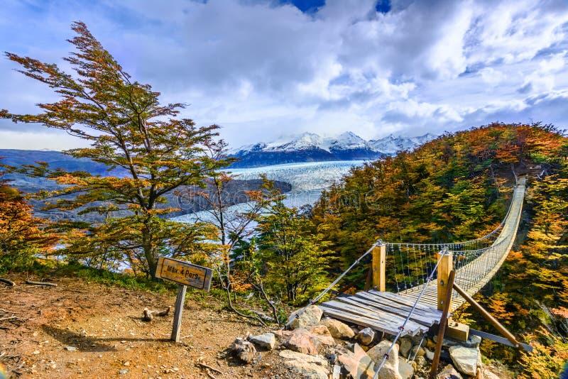 Grey Glacier, Patagonia, Cile, giacimento di ghiaccio patagonian, Cordigliera d immagini stock