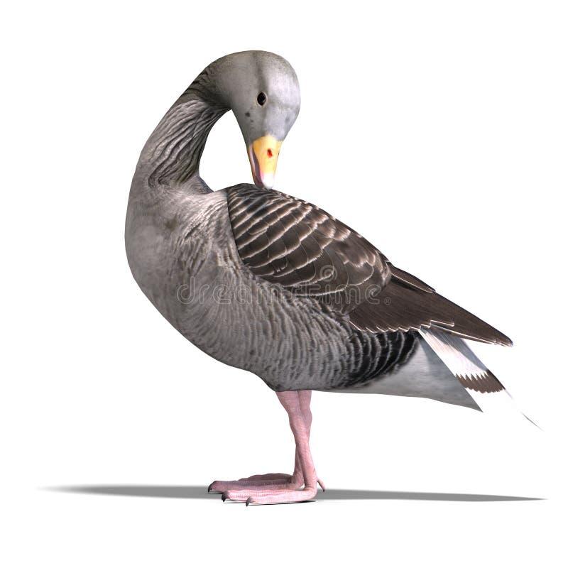 Grey goose royalty free illustration