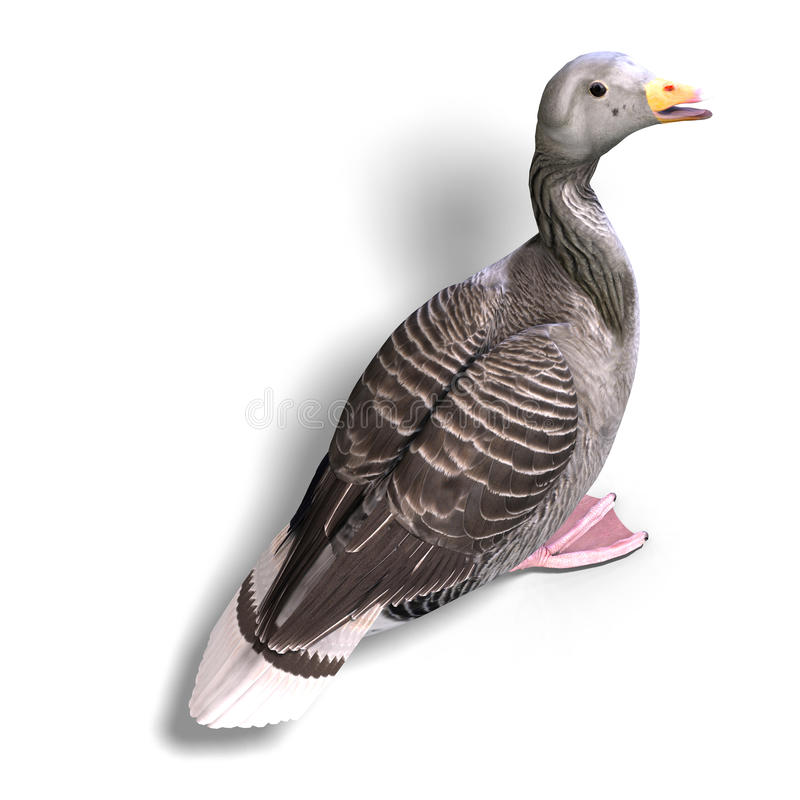 Grey goose vector illustration