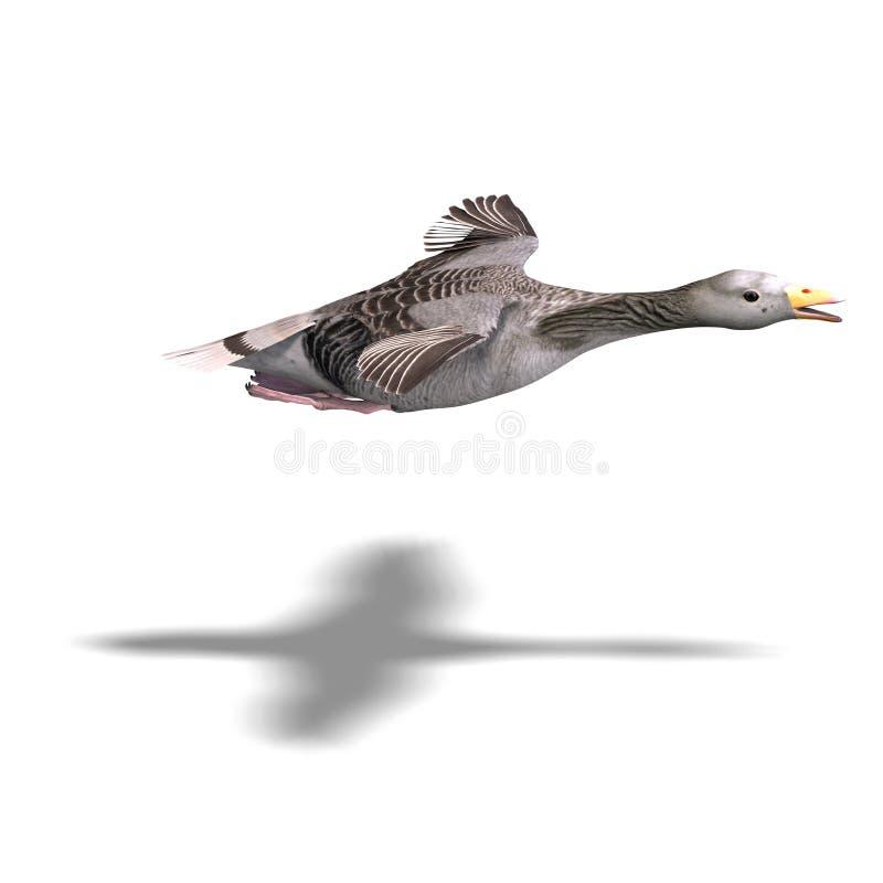 Grey goose in flight royalty free illustration