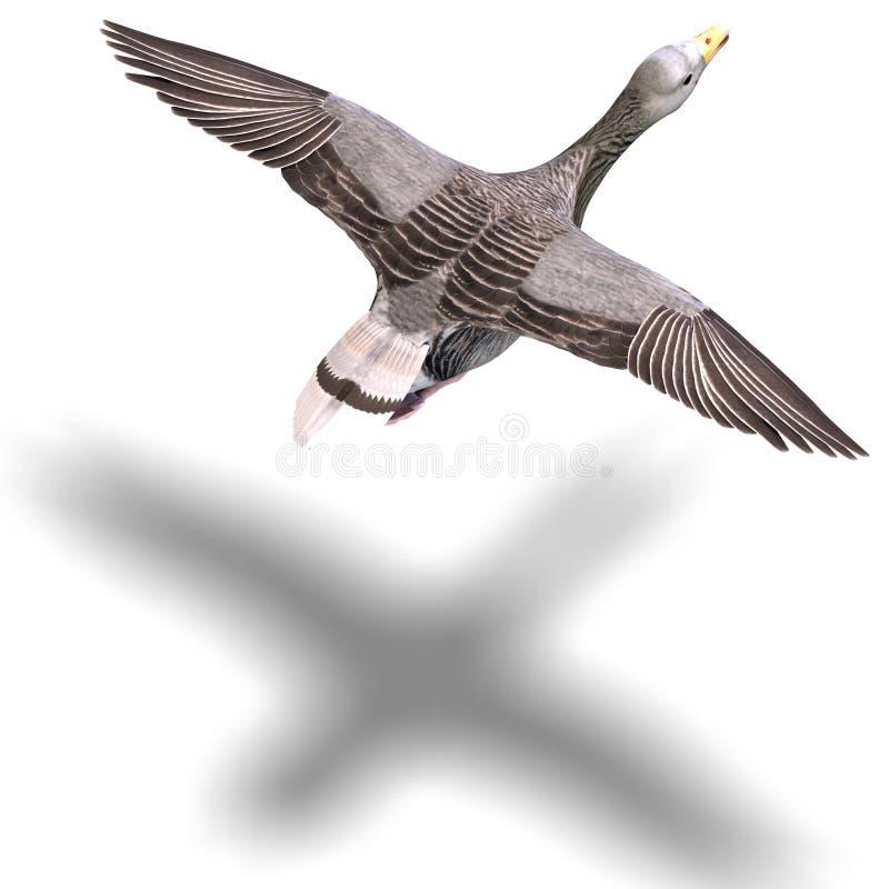 Grey goose in flight vector illustration