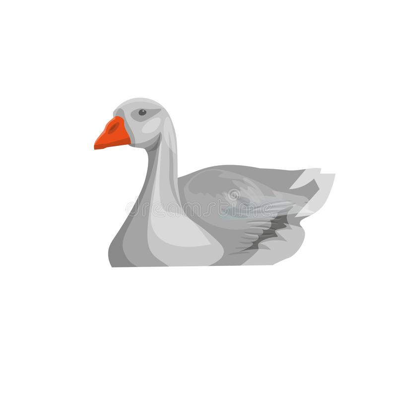 Grey goose swimming vector illustration