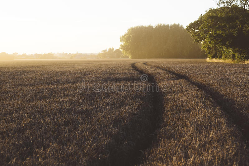 Grey Grass Fields During Golden Hour Free Public Domain Cc0 Image
