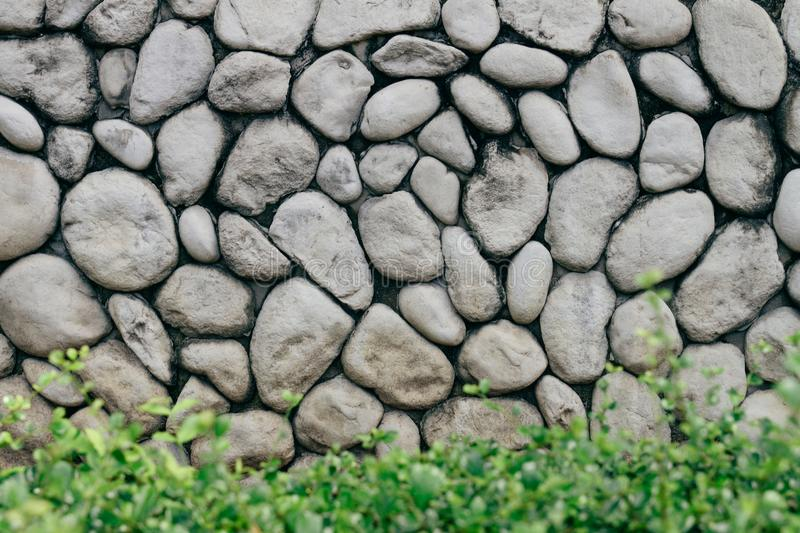 Grey or gray stone wall with natural texture round stone with low bush in the front. Natural stone old style wall. stock photo