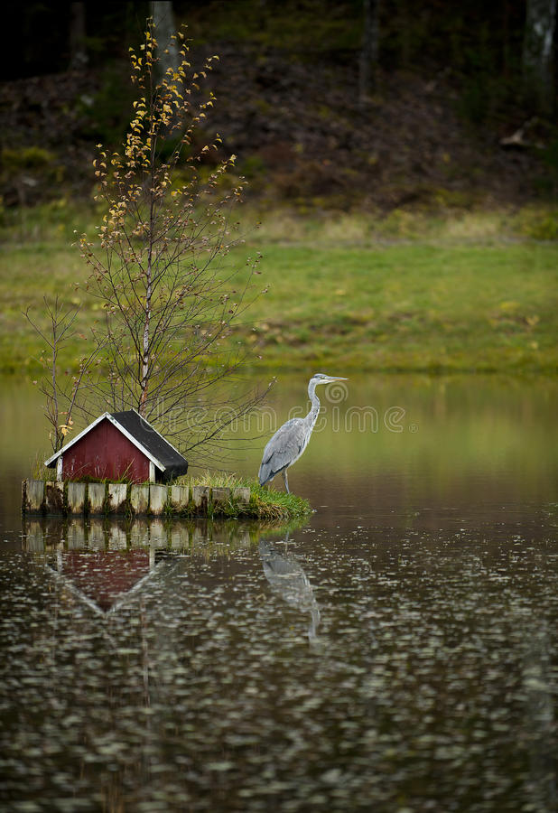 Grey heron, Ardea cinerea 2 stock images