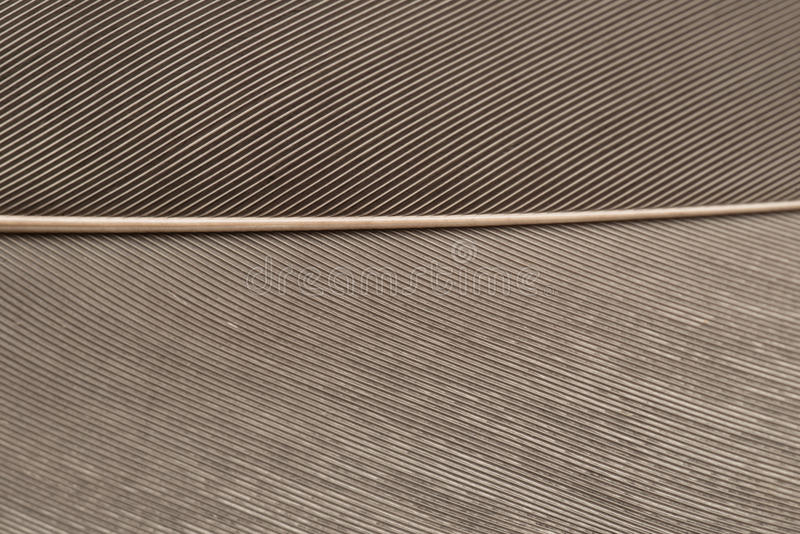 Grey Heron Feather in dichte omhooggaand stock afbeeldingen