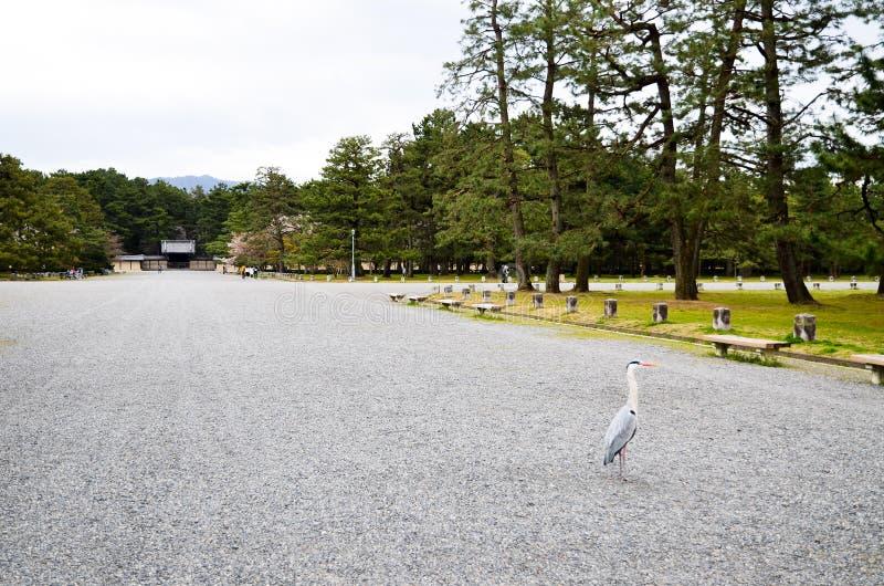 Grey Heron in Kyoto Gyoen Garden, Kyoto. Japan stock image