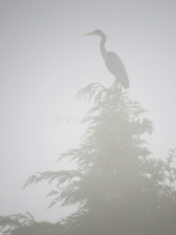 Grey Heron op treetop in ochtendmist die wordt neergestreken verticaal royalty-vrije stock afbeeldingen