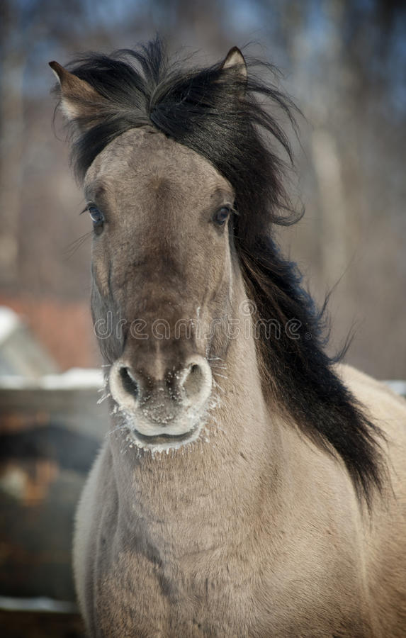 Download Grey horse stock photo. Image of neck, mane, grey, portrait - 23893628