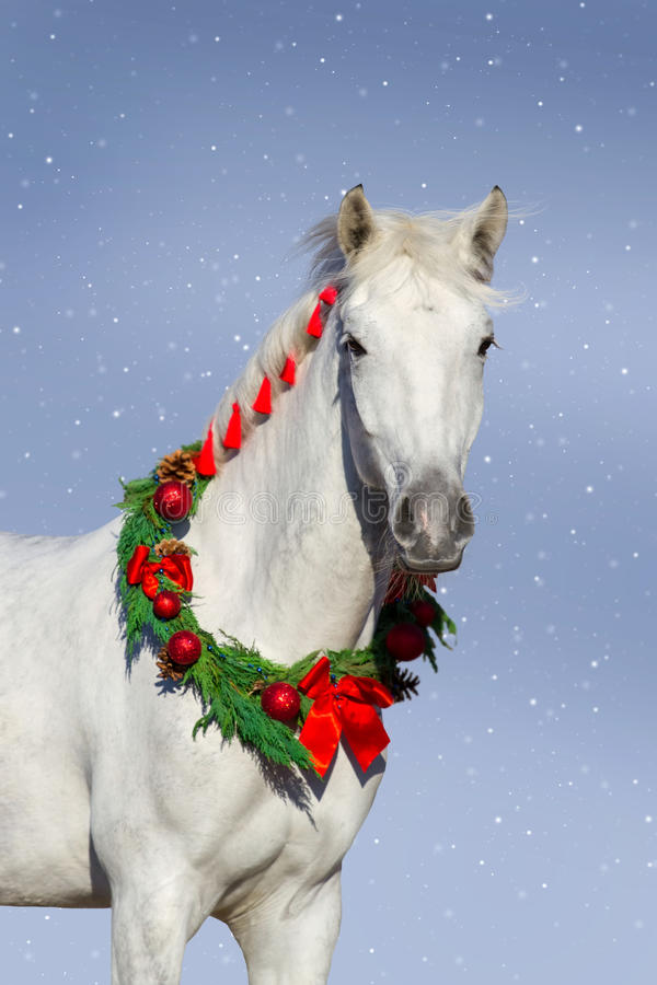 Grey horse with christmas wreath royalty free stock photography