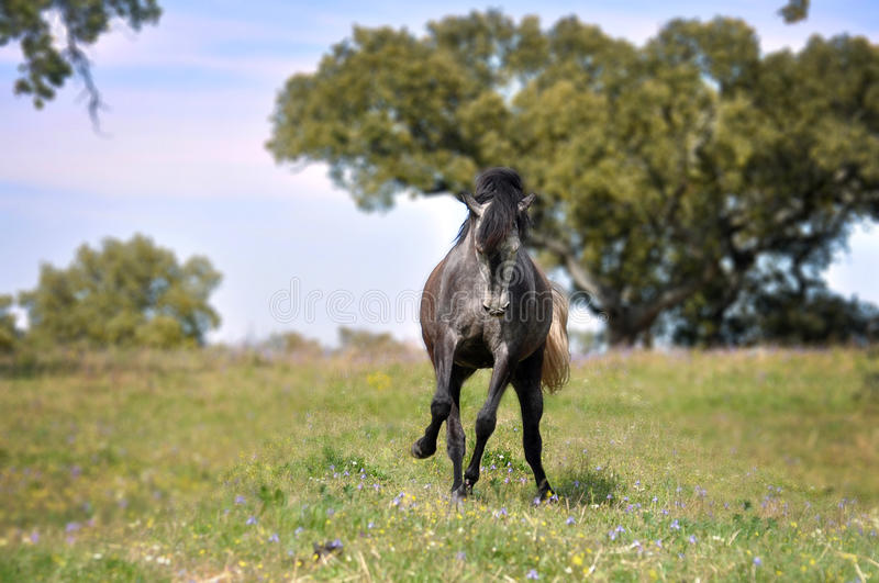 Grey horse in field stock photo