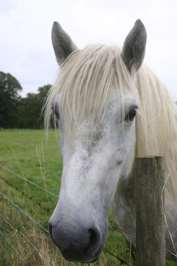 Grey horse. Looking over a wire fence royalty free stock photo