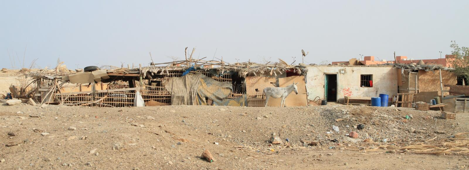Horse in front of slums. Grey horse standing in front of a slums in desert in Marsa Alam, Egypt, Africa stock image