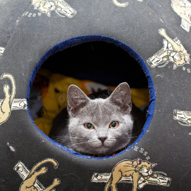 Grey kitten stock images