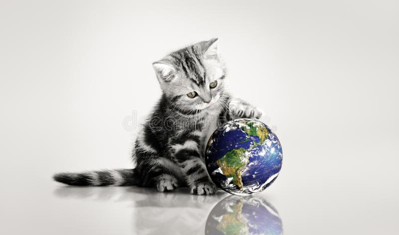 Grey kitten touch paws globe. Small grey kitten touch paws globe, on gray background, close-up.image planet by: Stokli, Nelson, Hasler Laboratory for Atmospheres stock image