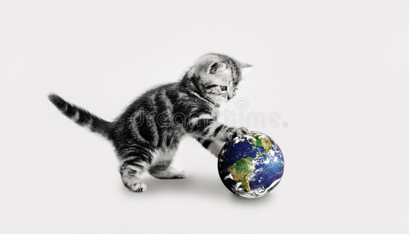 Grey kitten touch paws globe. Small grey kitten touch paws globe, on gray background, close-up.image planet by: Stokli, Nelson, Hasler Laboratory for Atmospheres royalty free stock photos