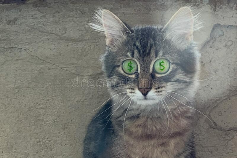 Grey kitten with wide open eyes. Grey kitten siting with wide open eyes royalty free stock photo