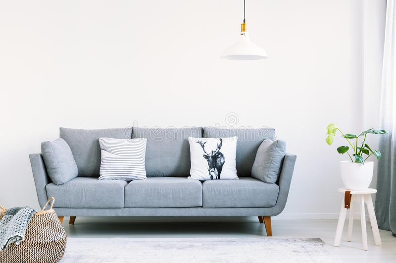Grey lounge with two pillows in the real photo of white living room interior with fresh plant and empty wall with place for your p. Ainting stock image